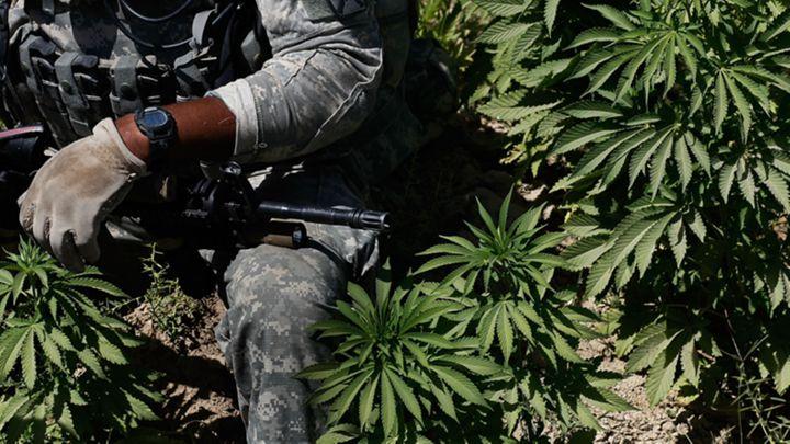 veteran marijuana